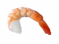 Media module (new-wave-shrimp.png)